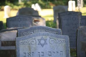 b'nai cemetery 022